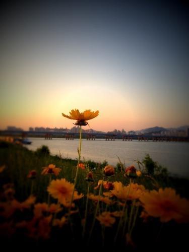 オレンジ色の空にオレンジの花が揺れる