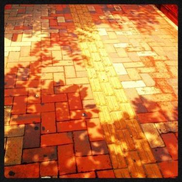 影に夏の足跡を感じて。