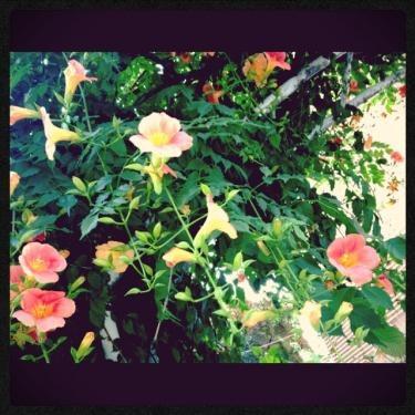 夏を感じさせる花