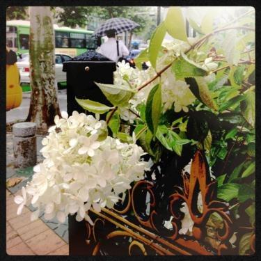 梅雨の花?