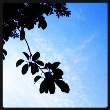 蝉の声が夏を感じさせる。