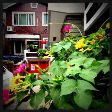 夏のお花も鮮やかです♡