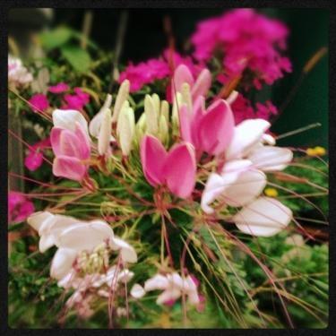 花を咲かせるために。