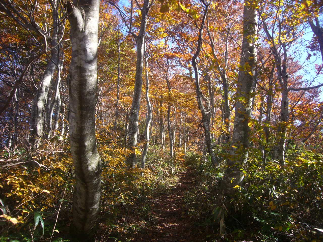 紅葉の登山道 H26.10.29撮影