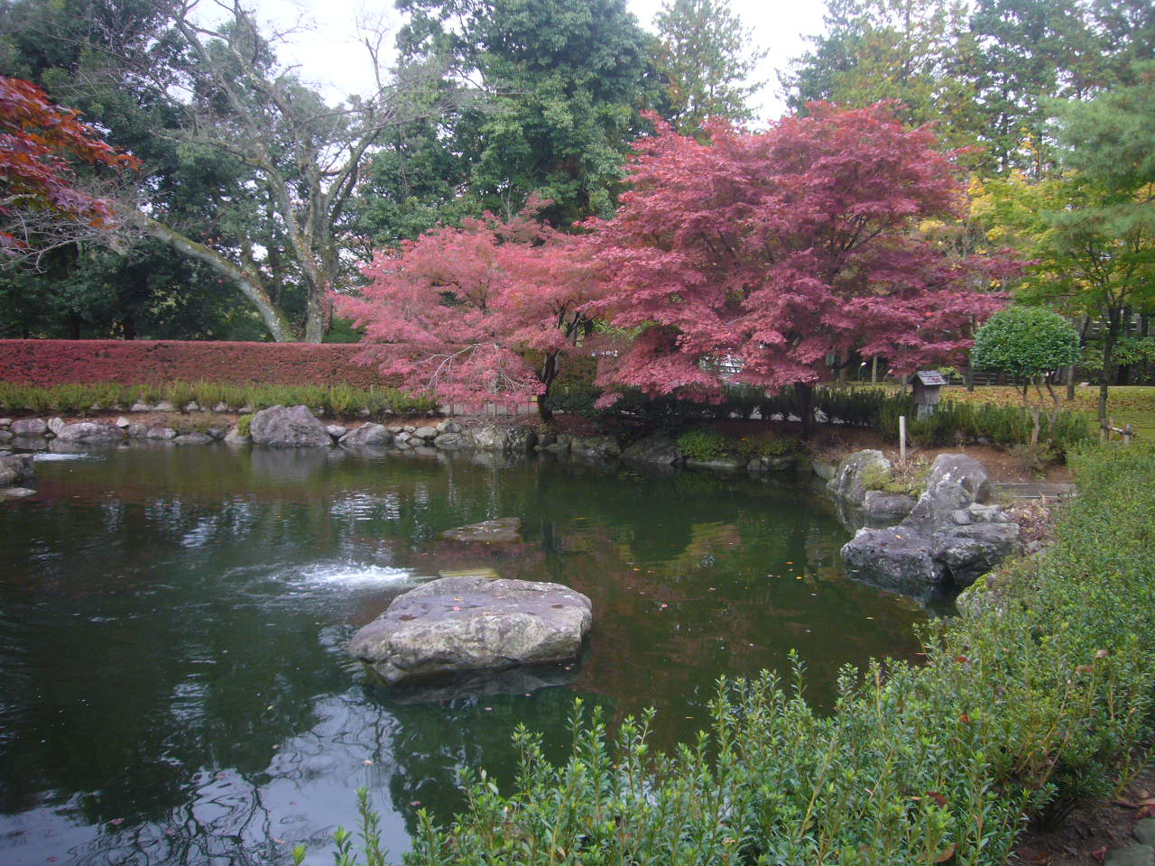 西山公園紅葉 H26.11.02撮影