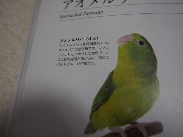 bP4260015.jpg