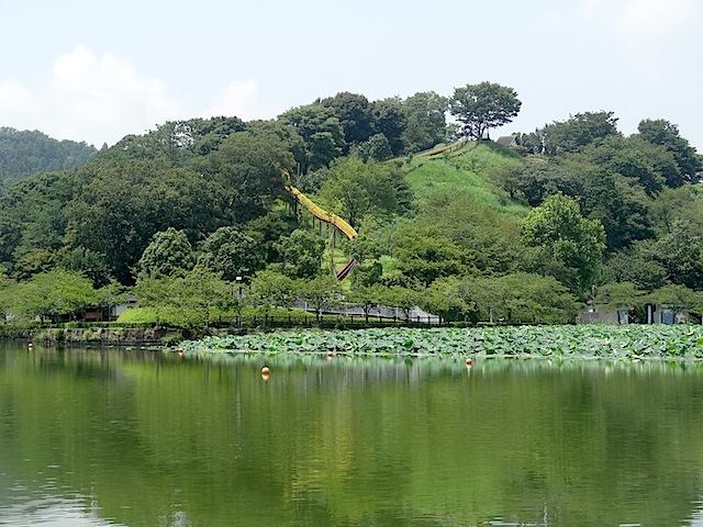 0727蓮華寺池公園2