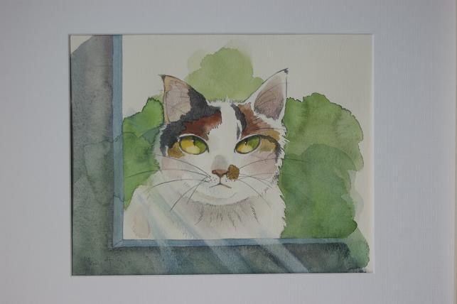 猫5 014