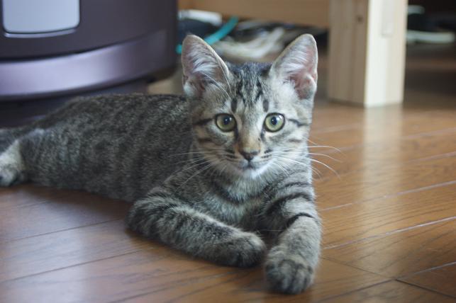 猫5 040