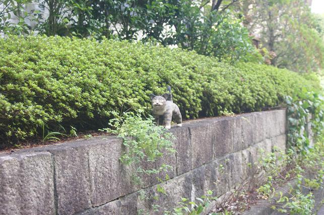 猫5 050