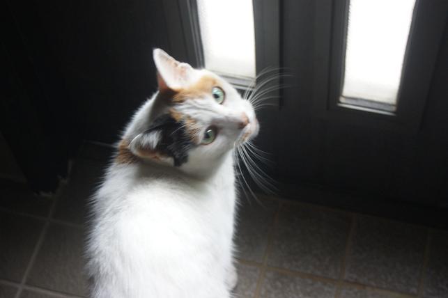猫5 068