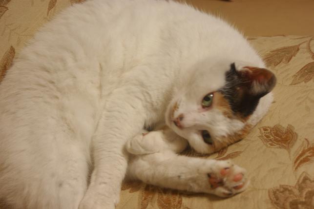 猫5 071