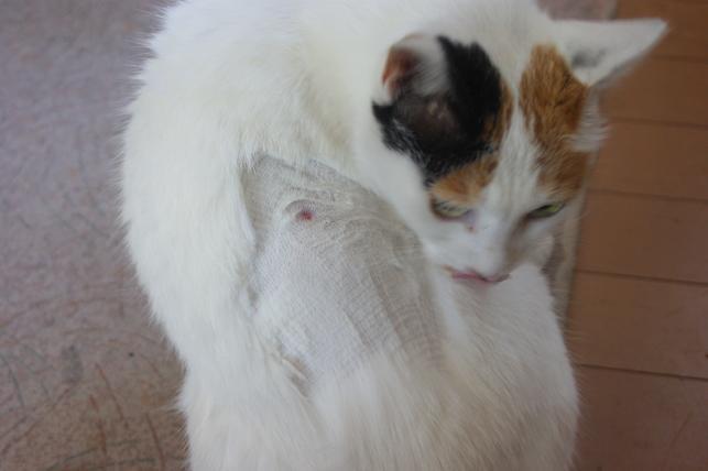 猫5 077