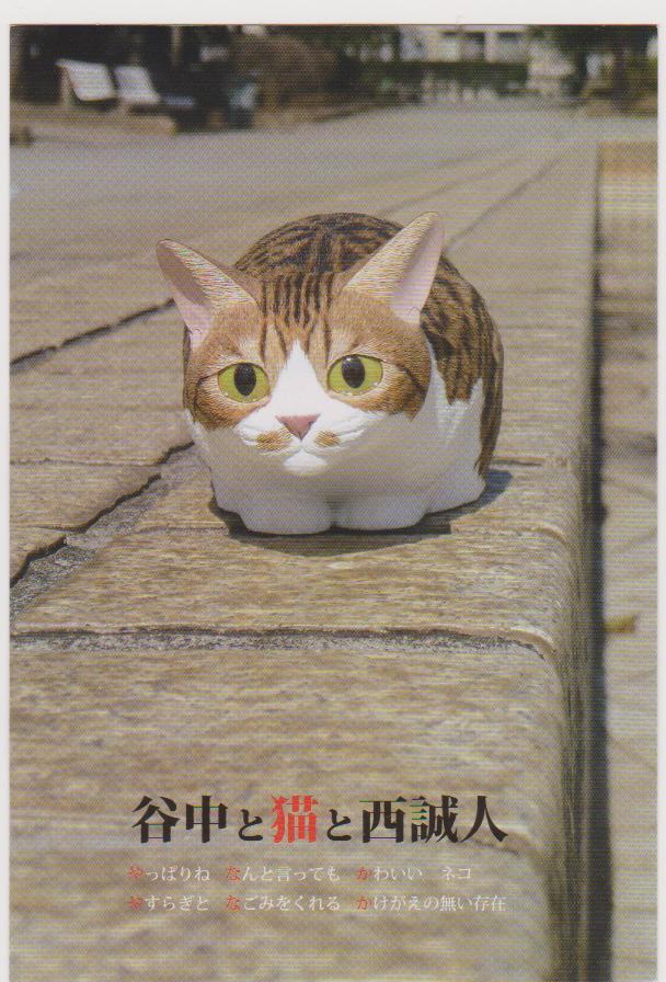 猫5 084