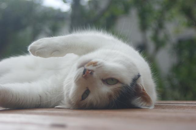 猫5 127