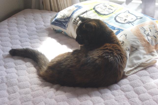 猫5 166