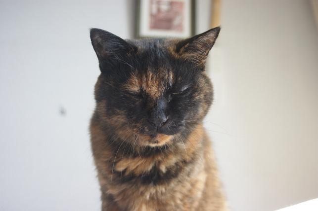 猫5 167