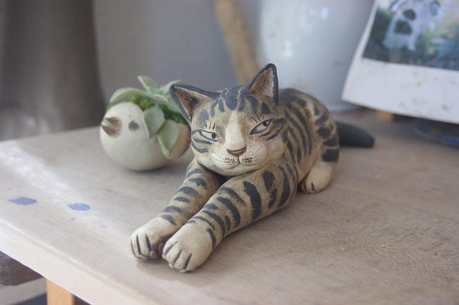 猫5 258