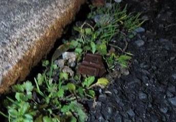 チョコ食べた 001