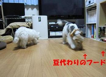 節分2014_ 008