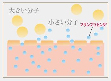 マリンプラセンタ分子量