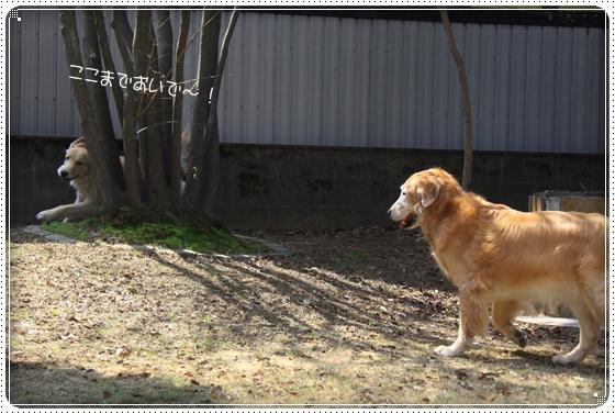 2013,3,30お庭遊び8