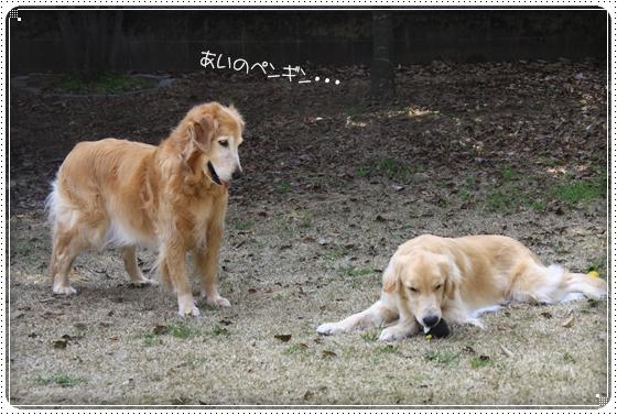 2013,3,30お庭遊び13