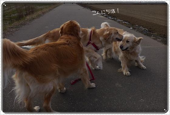 2013,3,31お散歩2