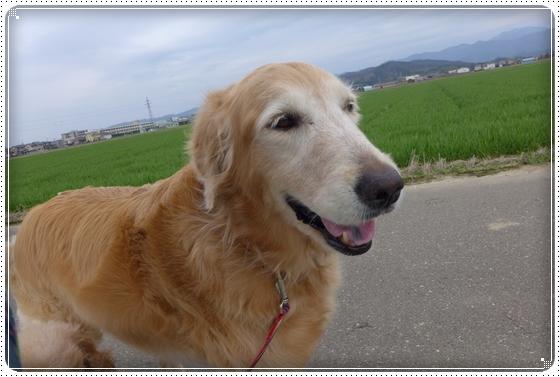 2013,3,31お散歩9