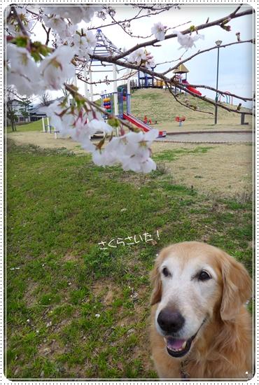 2013,4,2お散歩1