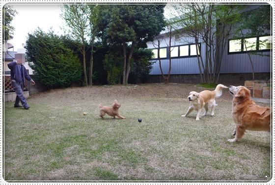 2013,4,14お庭遊び2