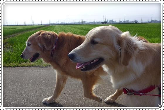 2013,4,17お散歩5