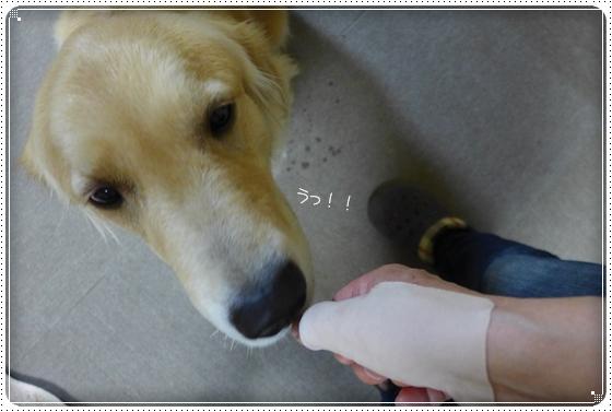 2013,4,17お散歩3