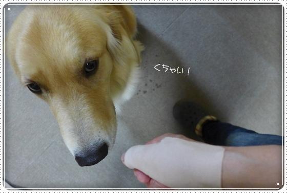 2013,4,17お散歩4