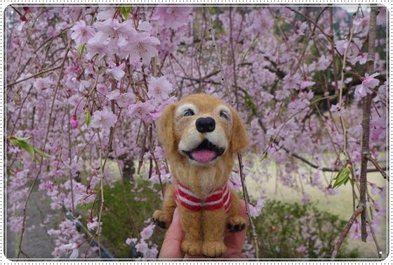 2013,4,19桜11