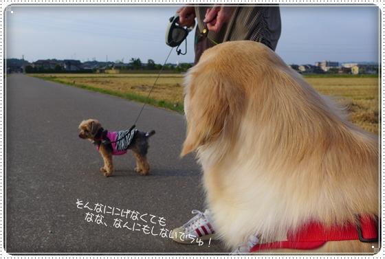 2013,6,4お散歩3