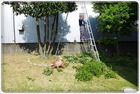 2013,6,14お散歩2