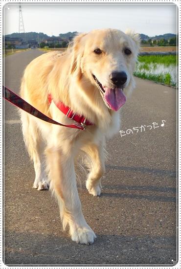 2013,6,14お散歩15
