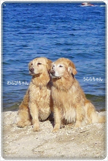 2013,6,17琵琶湖1-1
