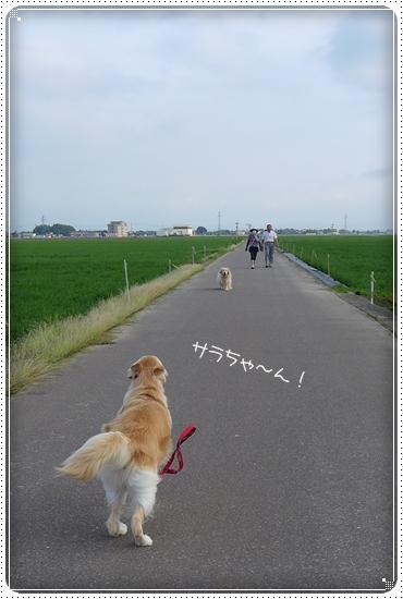 2013,6,27お散歩5