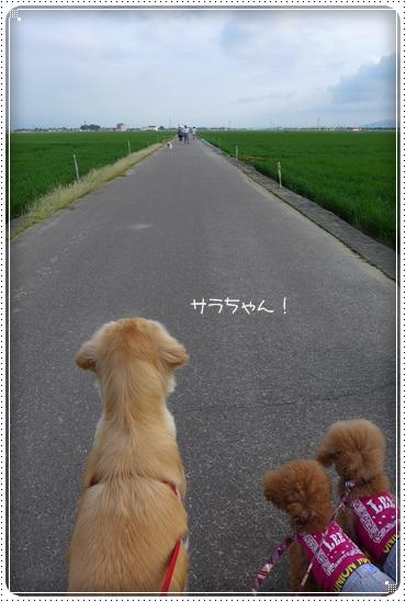 2013,6,27お散歩4
