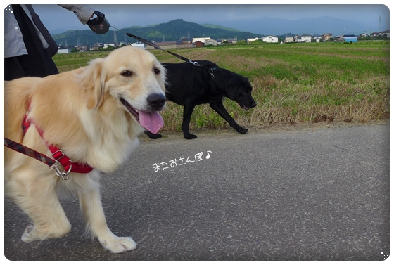 2013,6,27お散歩3