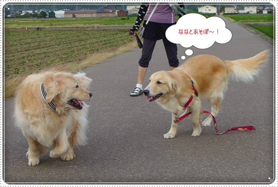 2013,6,27お散歩9