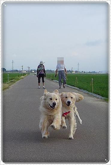 2013,6,27お散歩18