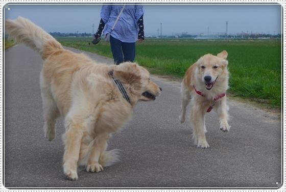 2013,6,28お散歩3