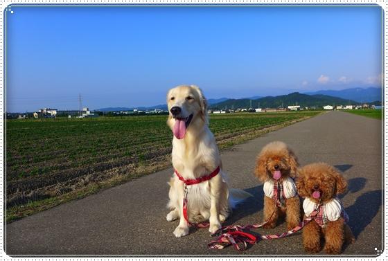 2013,6,29お散歩1