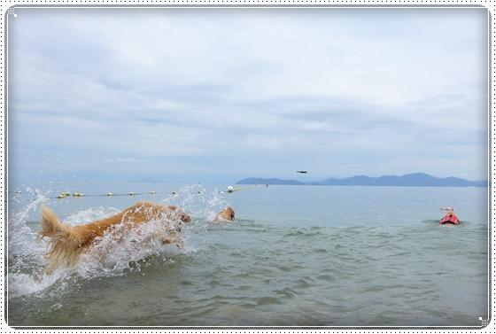 2013,7,3琵琶湖1