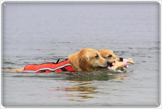 2013,7,3琵琶湖11