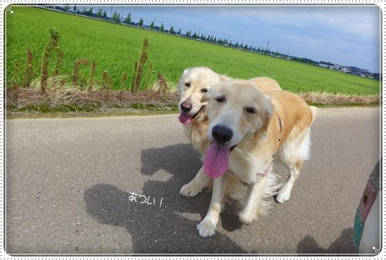 2013,7,6お散歩5