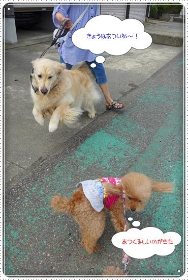 2013,7,6お散歩2